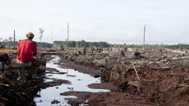 2000年以来,婆罗州已经流失了2万平均英里的林地。
